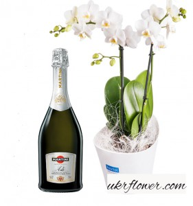 Orchid combo ― Ukrflower - flower delivery
