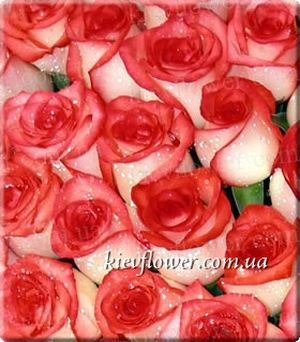 Rose Blush ― Ukrflower - flower delivery