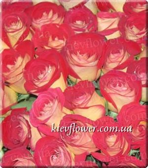 Friendship Rose ― Ukrflower - flower delivery