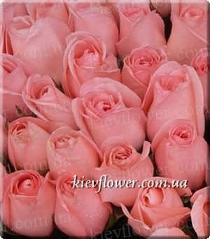 Titanic Rose ― Ukrflower - flower delivery