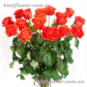 Coral roses ― Ukrflower - flower delivery