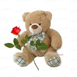 Bear with rose ― Ukrflower - flower delivery