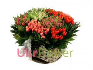 "Basket of tulips ""Rainbow "" ― Ukrflower - flower delivery"