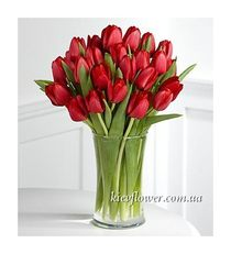 Bouquet of 31 red tulip