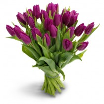 27 purple tulips