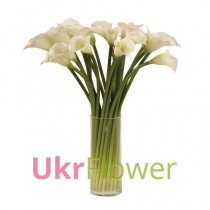 15 white callas in vase